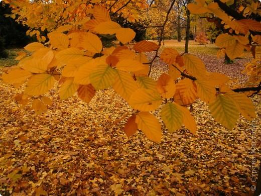 Осень фото 40