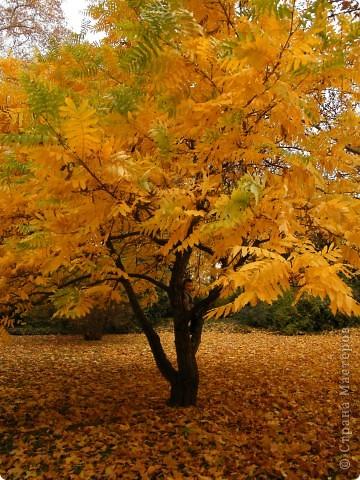 Осень фото 41