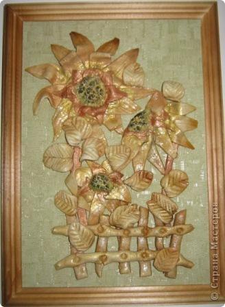Подсолнух можно по-праву считать символом Кубани. фото 1