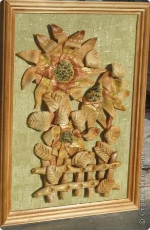 Подсолнух можно по-праву считать символом Кубани. фото 2