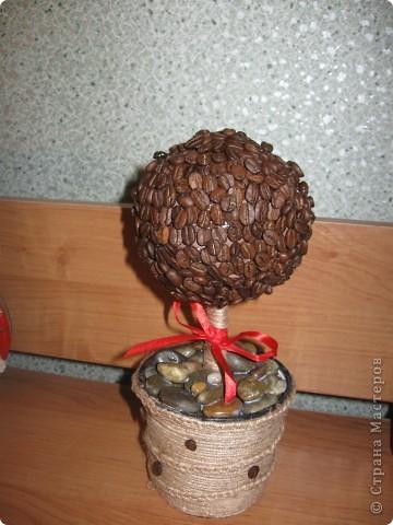 Кофейное дерево в подарок подруге