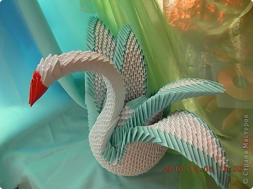 влюбленная пара лебедей! фото 4