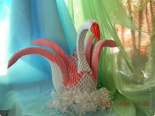влюбленная пара лебедей! фото 3
