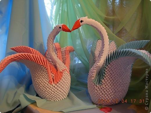 влюбленная пара лебедей! фото 2