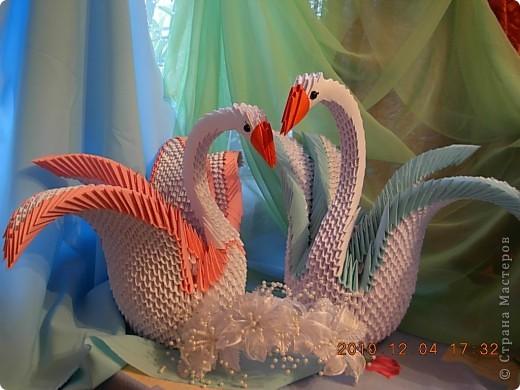 влюбленная пара лебедей! фото 1