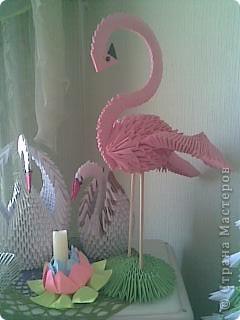 розовый фламинго фото 2