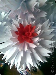 Мои цветы фото 7