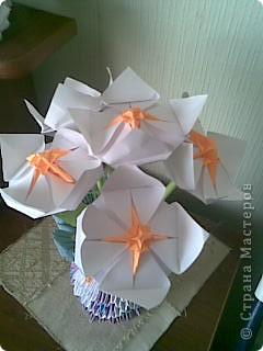 Мои цветы фото 9