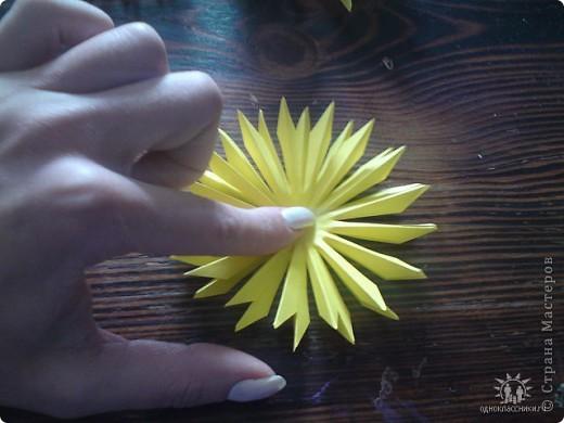 Мои цветы фото 14