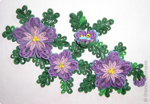 По просьбе мамы сделала подарок для её одноклассника. Очень давно вынашивала желание сделать квиллинговую работу (более-менее крупную), но все как-то страшновато было, а тут появился повод и я решилась. Лиловые цветы Art-KHome  и её МК http://stranamasterov.ru/node/104303, за который огромное спасибо, долго не давали спать спокойно, очень уж цветочки нравились. Конечно, моя работа на расстоянии звезды от работы Анны, но я осталась довольна и процессом работы, и конечным результатом. К сожалению, совершенно случайно стерла с фотоаппарата все фотографиии, кроме одной. Поэтому фото работы без рамки осталось в единственном числе. фото 1