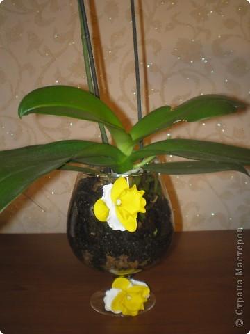 Орхидея для орхидеи