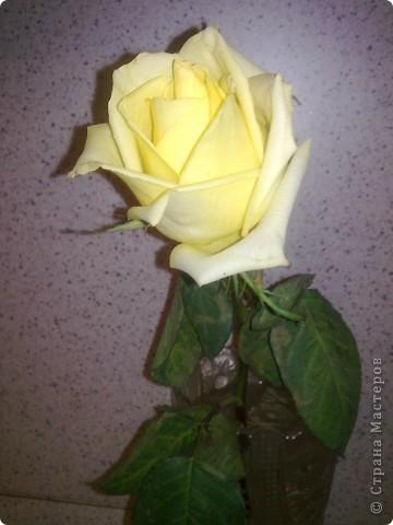 Вот такая золотая роза... фото 2
