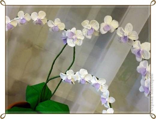 орхидеи из холодного фарфора фото 2