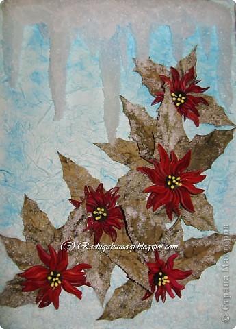 Пуансеттия, должно быть, одно из самых узнаваемых растений на Земле, оно несет нам весть о том, что приближается Рождество. Для большинства из нас это означает холода и снег, но в действительности пуансеттия пришла к нам из теплых тропических стран.  фото 4