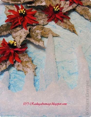 Пуансеттия, должно быть, одно из самых узнаваемых растений на Земле, оно несет нам весть о том, что приближается Рождество. Для большинства из нас это означает холода и снег, но в действительности пуансеттия пришла к нам из теплых тропических стран.  фото 5