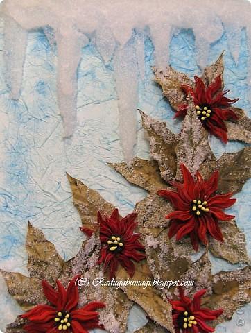 Пуансеттия, должно быть, одно из самых узнаваемых растений на Земле, оно несет нам весть о том, что приближается Рождество. Для большинства из нас это означает холода и снег, но в действительности пуансеттия пришла к нам из теплых тропических стран.  фото 1