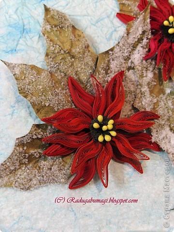 Пуансеттия, должно быть, одно из самых узнаваемых растений на Земле, оно несет нам весть о том, что приближается Рождество. Для большинства из нас это означает холода и снег, но в действительности пуансеттия пришла к нам из теплых тропических стран.  фото 6