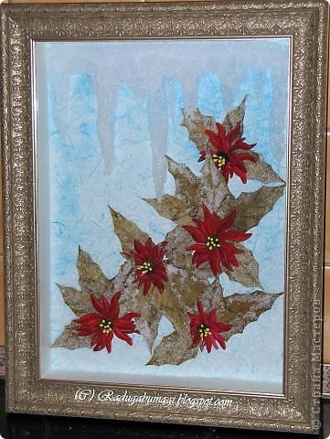 Пуансеттия, должно быть, одно из самых узнаваемых растений на Земле, оно несет нам весть о том, что приближается Рождество. Для большинства из нас это означает холода и снег, но в действительности пуансеттия пришла к нам из теплых тропических стран.  фото 2