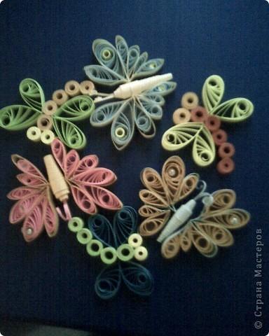 бабочки,стрекозы фото 1
