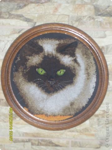 "Картина ""Сиамская кошка"""