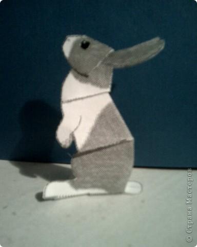 кролики фото 1