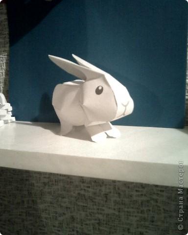 кролики фото 3
