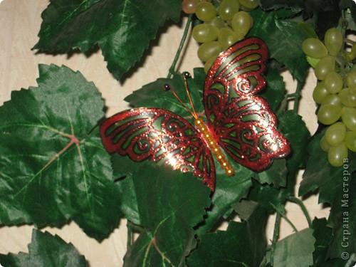 Моя самая любимая бабочка фото 3