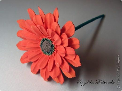 Мой первый цветок!!! фото 4
