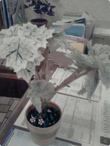 Дерево с кленовыми листьями фото 3