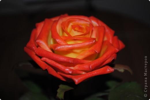 роза из глины Modena фото 2