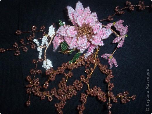 Бабочки и цветочки фото 2