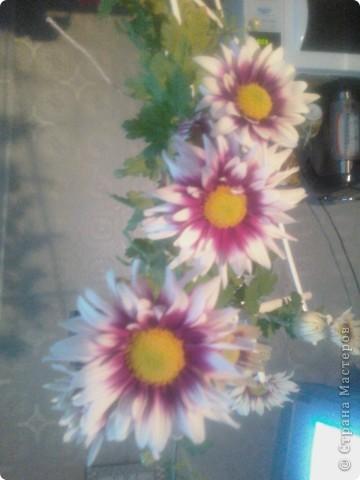 Вот такие хризантемы цветут у меня сейчас. фото 2