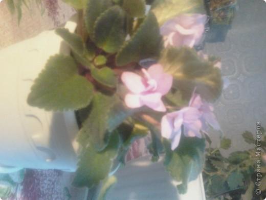 Вот такие хризантемы цветут у меня сейчас. фото 3