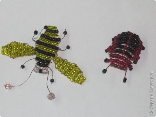 бабочки фото 6