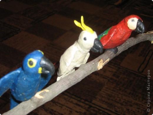 Попугайки))) фото 1