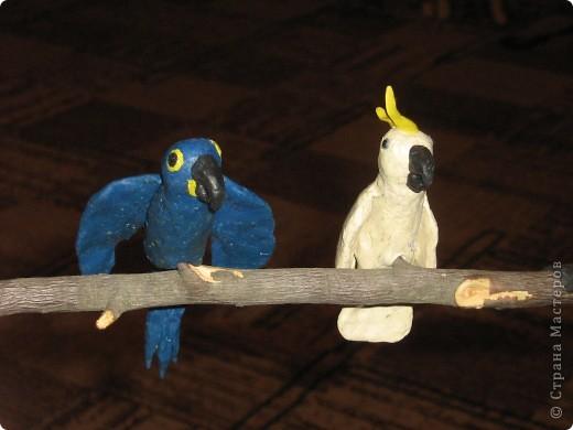 Попугайки))) фото 2
