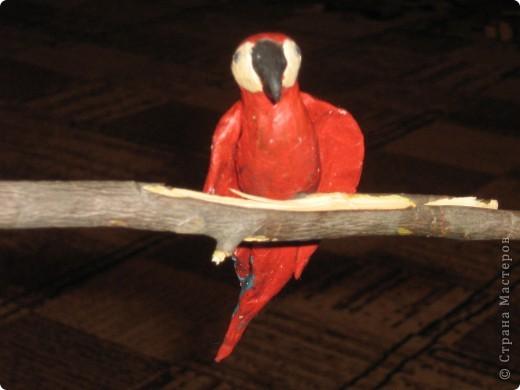 Попугайки))) фото 3