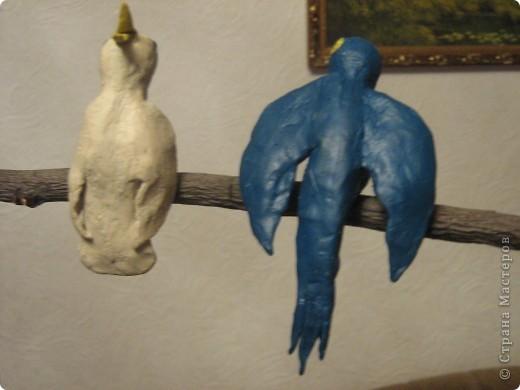 Попугайки))) фото 4
