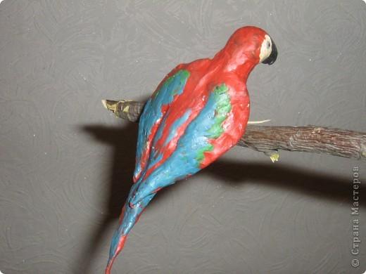 Попугайки))) фото 5
