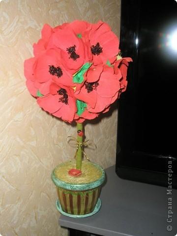 Маковое дерево фото 1