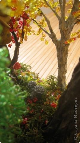 Осень, в сказочном лесу фото 4