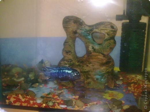 Водные черепахи, просушивают панцирь фото 5
