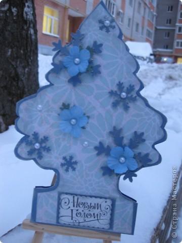 Голубая ель (образец) фото 1