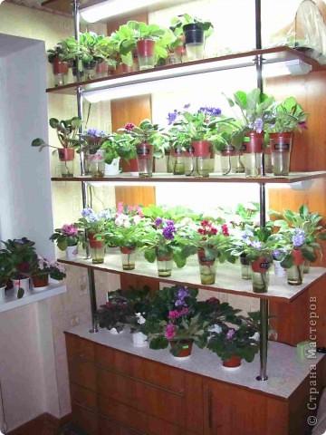 """Мое основное хобби - комнатные цветы. Люблю практически все виды комнатных растений, но главная моя """"цветочная болезнь"""" это сенполии.  фото 1"""