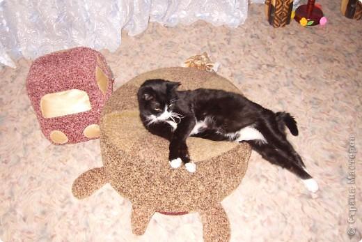 Коты-примитивы фото 2