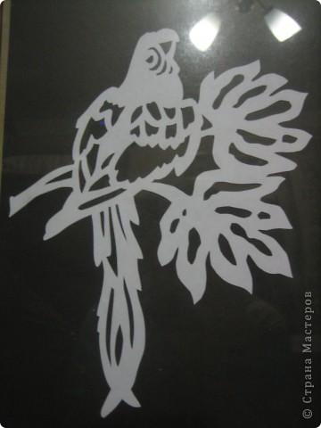 Попугай на веточке. фото 2