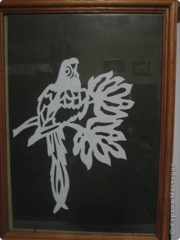 Попугай на веточке. фото 1