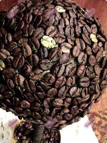 Вот теперь и у меня есть свое кофейное деревце, которое уже завтра будет подарено! А запах от него - изумительный (обмотала пленкой, чтоб не выдохлось) фото 3