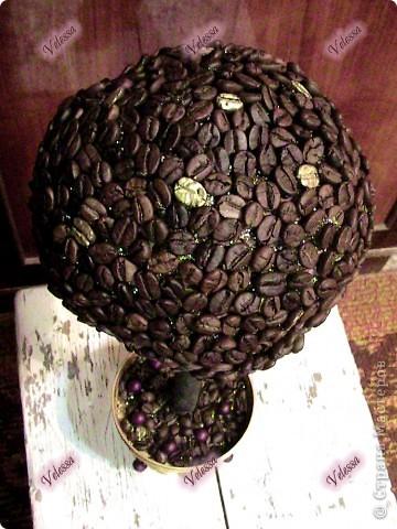 Вот теперь и у меня есть свое кофейное деревце, которое уже завтра будет подарено! А запах от него - изумительный (обмотала пленкой, чтоб не выдохлось) фото 2