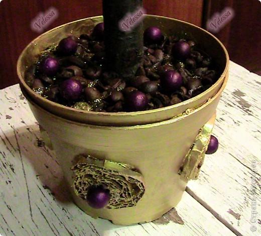 Вот теперь и у меня есть свое кофейное деревце, которое уже завтра будет подарено! А запах от него - изумительный (обмотала пленкой, чтоб не выдохлось) фото 4
